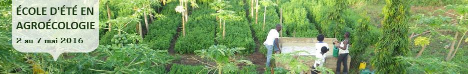 Bannière web : photo d'une ferme africaine couverte densément de plants très verts.